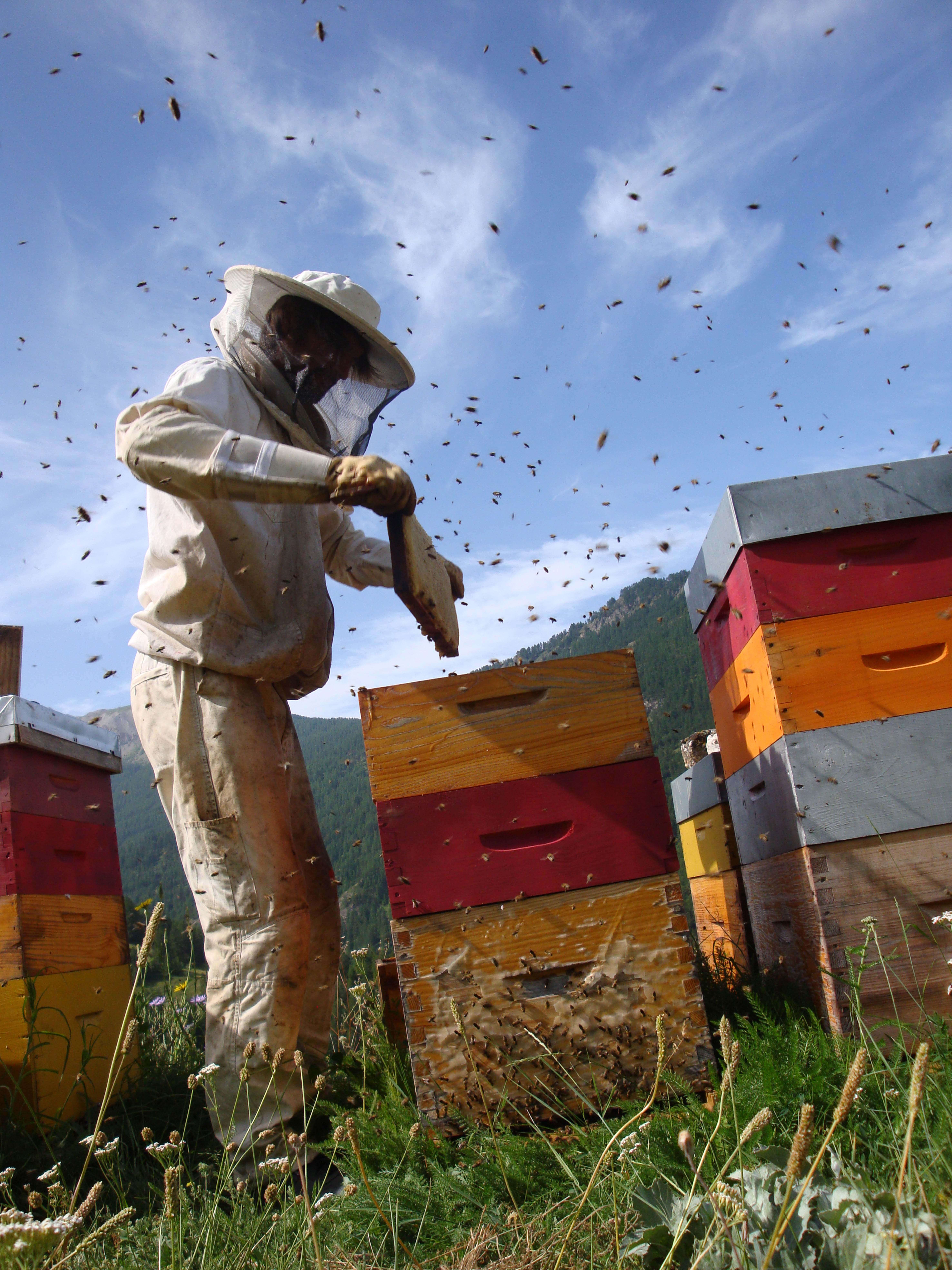 apiculteur hautes alpes